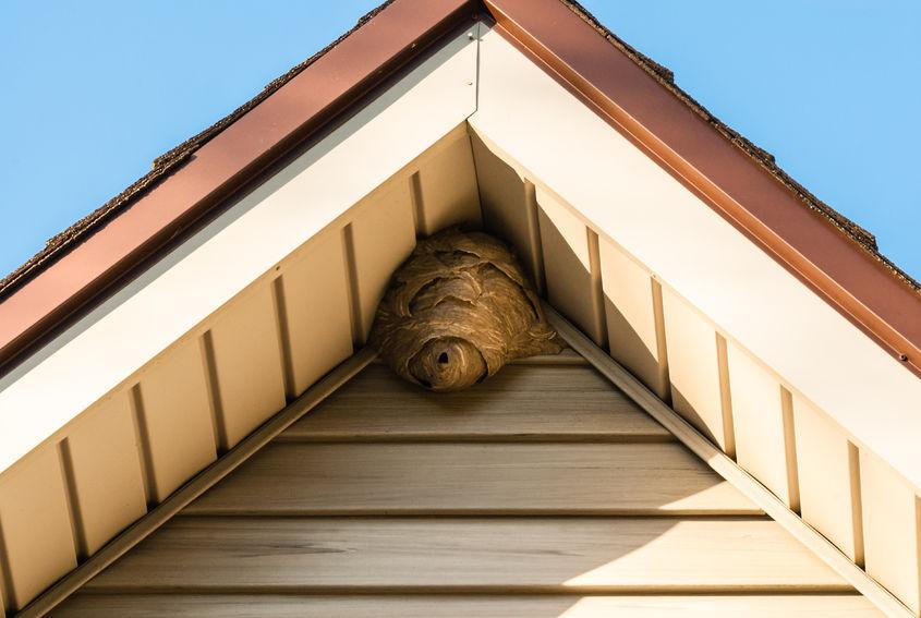 wespennest buitenkant dak gevel beplating